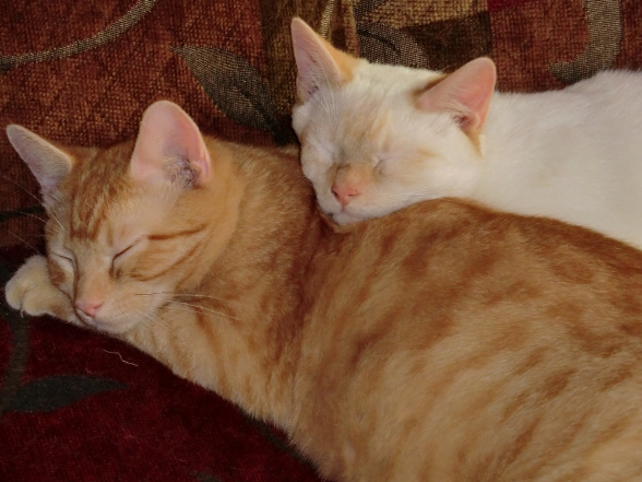 Rusty and Flame, Sleeping Buddies
