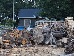 Cut and prepare wood for winter