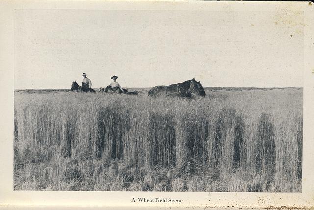 McElhinney - Outlook - A Wheat Field Scene