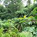 Lost gardens at Heligan
