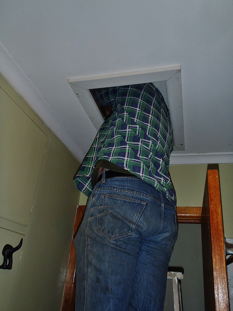 ceiling cat installation