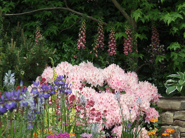 Foxgloves, iris and rhodedendrons