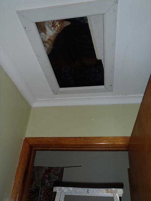 ceiling cat Zetor