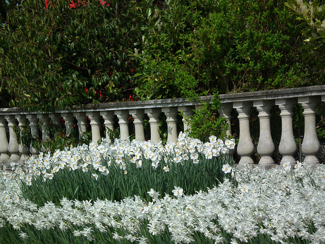 Ballastrade of Narcissus