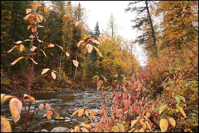 Fall at Narcosli Creek, BC