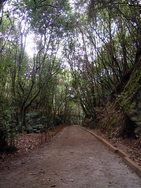 Ruta de los Viñátigos Centenarios