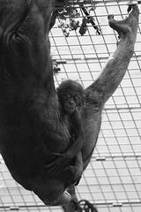 Akrobatik mit Baby (Wilhelma)