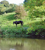 Grazing horse by the canal.