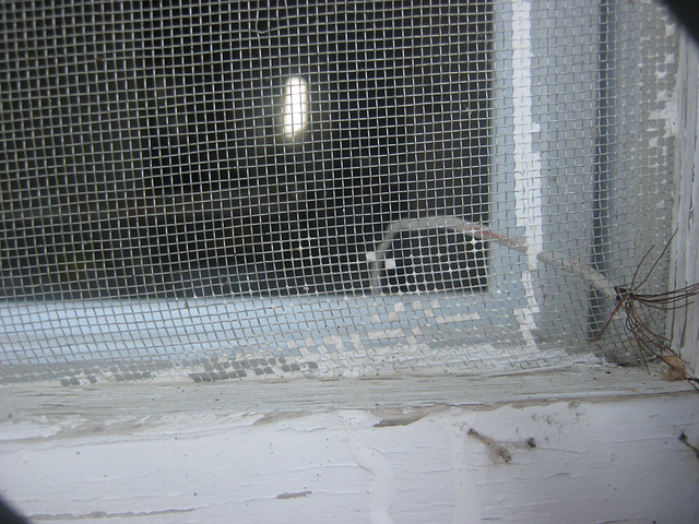 metalic mesh antenna  close up