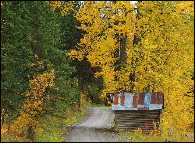 Fall near Bowron Lake, BC