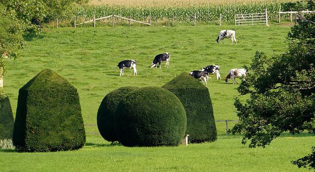 Des vaches dans un jeu de quilles..........