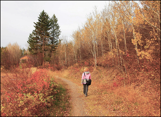 Fall at the 108 Mile Trail.