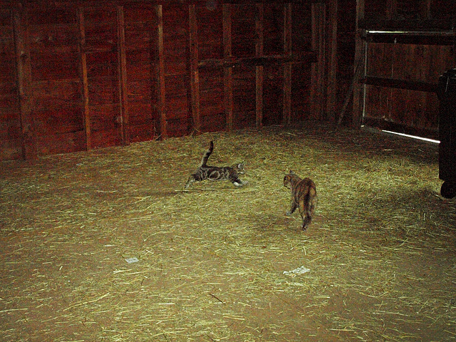 introduction to the hay loft