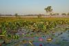 Sunrising over Kakadu