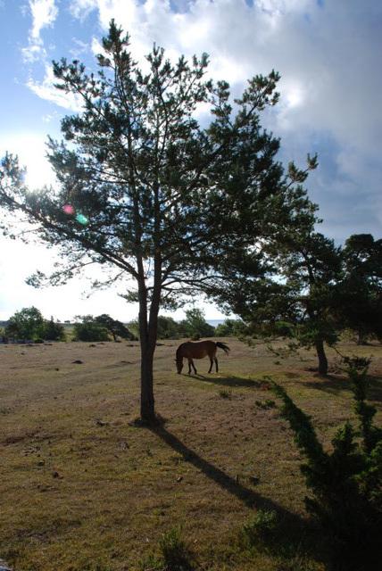 Around Nystugu Farm