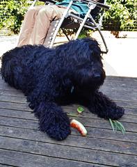 Fonzie likes watermelon