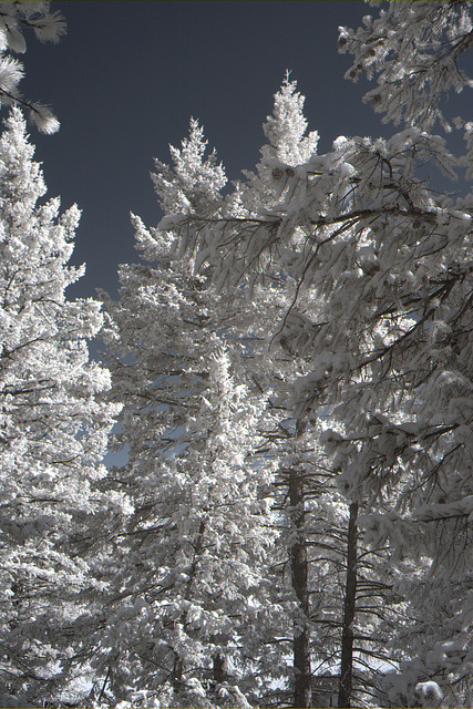 Infrared Snow