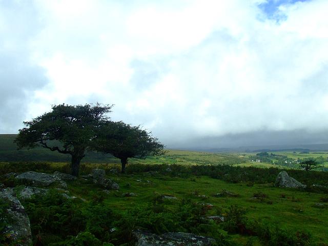 Dartmoor trees