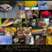 365 Project: September Collage