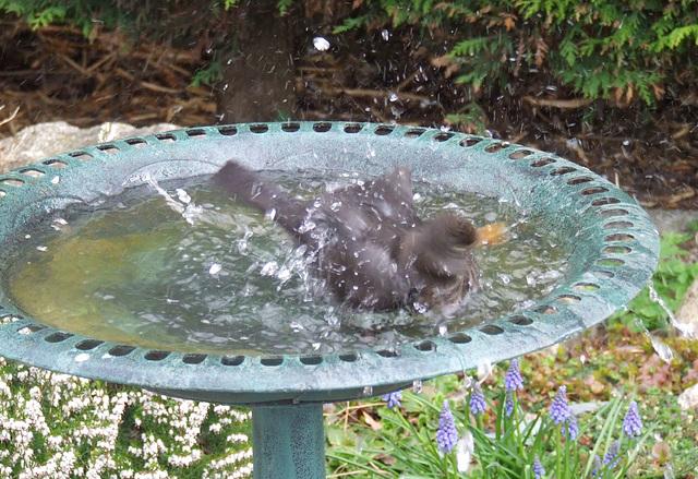 Splashy splashy
