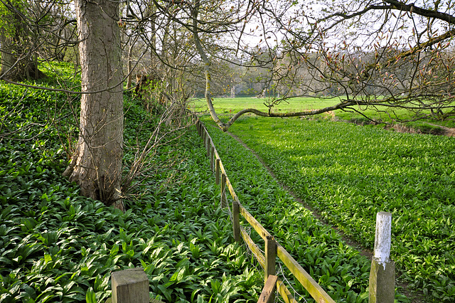 Ransomes are looking good