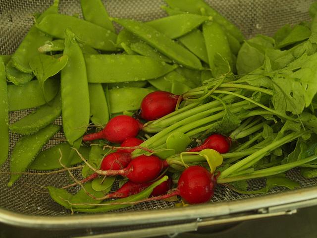 micro harvest!