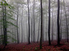 Moody forest.