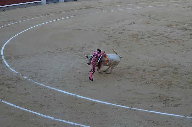 Madrid Bullfights