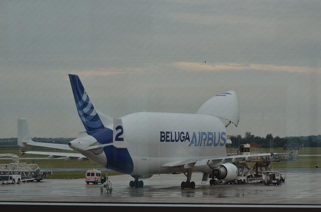 Another Beluga