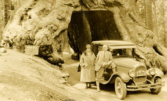 Souvenir Photo of Man and Woman at the Wawona Tree