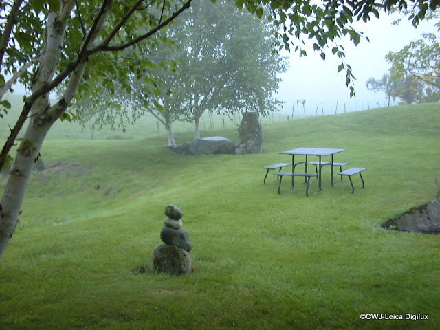 A Misty Morning with Leica Digilux