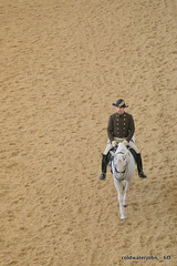 Morning exercise at The Spanish Riding School in the Hofburg Palace
