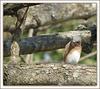 bird ID .. (maybe) female Bluebird ..