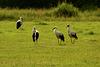 Stork conference
