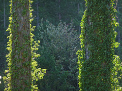 20131004 Fee Forêt Parlatges (3) Ledge