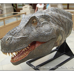 Dino head  - The Natural History Museum - Oxford - 4.8.2005