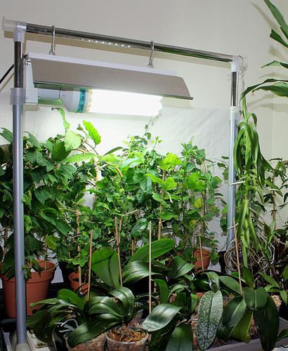 Am nager un jardin int rieur pour hiverner mes plantes for Basilic culture interieur