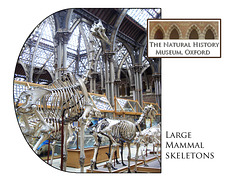 Large Mammal skeletons - The Natural History Museum - Oxford - 4.8.2005