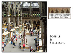 Fossils & skeletons  - The Natural History Museum - Oxford - 4.8.2005