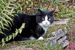 Katze im Weinberg