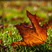 """293/365: """"Every leaf speaks bliss to me, fluttering from the autumn tree."""" ~ Emily Brontë"""