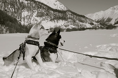Val d' Hérens Switzerland - My dogs