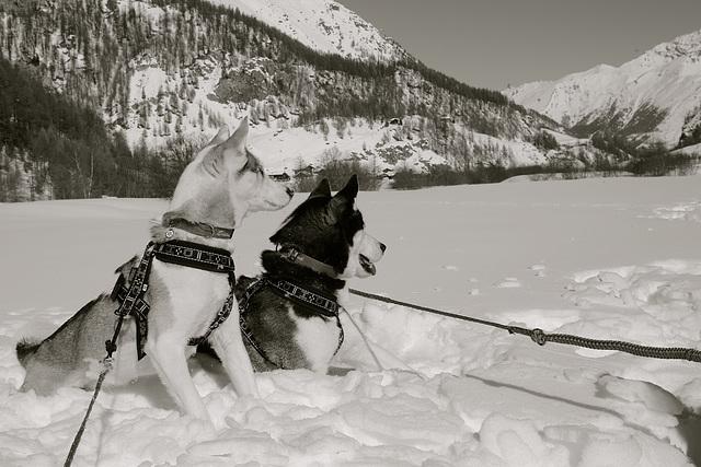 Val d' Hérens Switzerland - My dogs