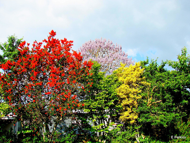 Trees of many colours