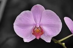 NICE: Parc Phoenix: Une orchidée.