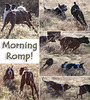 Morning Romp! (and lots of notes!)