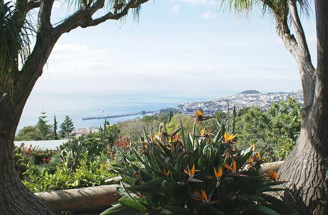 Madeira. Monte. Blick vom Botanischen Garten auf den Hafen von Funchal. ©UdoSm