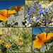 Desert Flowers - 25 November 2013
