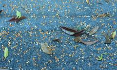 Fallen flowers of fragrant orange-colored olive