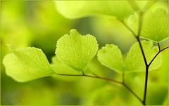 Macro in Green...